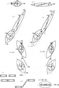 図41紡錘形の収縮による航