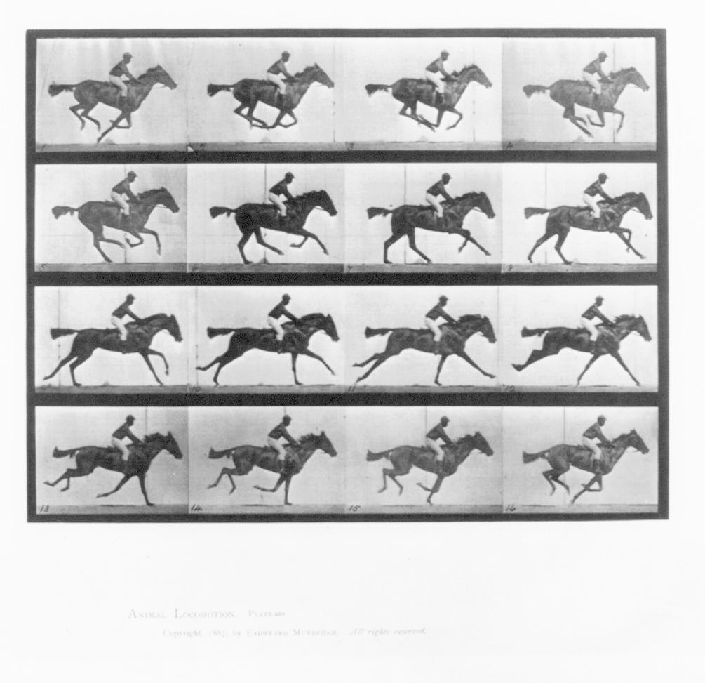 Stop motion photo; race horse locomotion. Scan of 2 d images in the public domain believed to be free to use without restriction in the US.